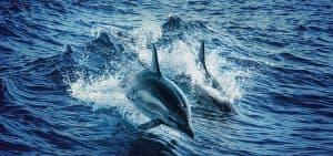 Protección animal para los delfines en la pesca de atunes