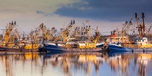 Las principales especies de atún consumidas en Colombia y el mundo